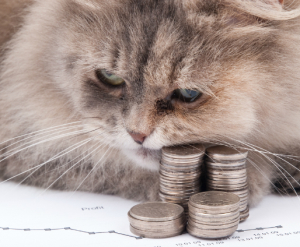 600px-cat-and-money
