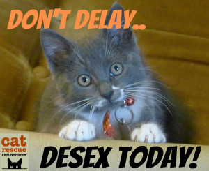 Don't delay desex today