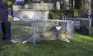 TNR article pic
