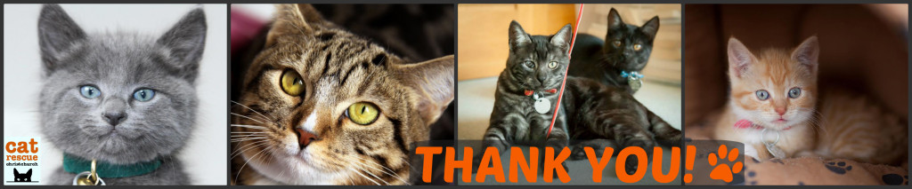 Thank you cats collage with logo