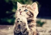 begging kitten