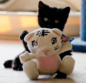 black kit with soft toy