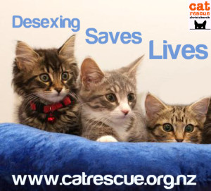 desexing saves lives_3 kittens