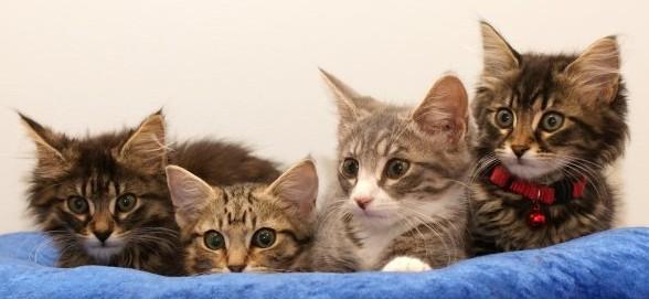 world's best cat litter odor control
