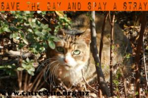 spay a stray