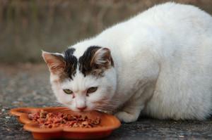 white TNR cat