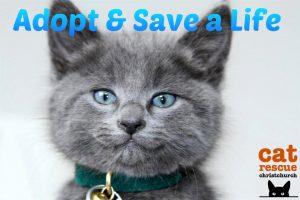 Adopt & Save a Life