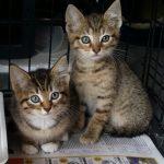Tiger & Keni