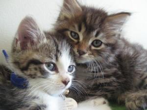 Jasper & Miss Molly (2)