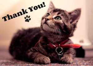 tabby kitten_thank you