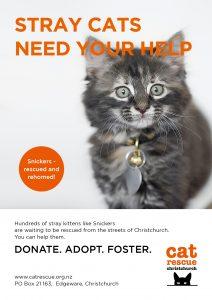 Poster_Kitten_web